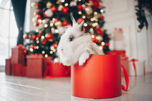 Rabbit Sitting In Christmas Present On The New Year's Background