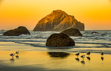 View Of Face Rock At Sunrise From Sunrise State Park In Oregon With Shorebirds In The Foreground.