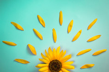 Creative Layout Made Of Sunflower And Petals On Bright Blue Background. Flat Lay