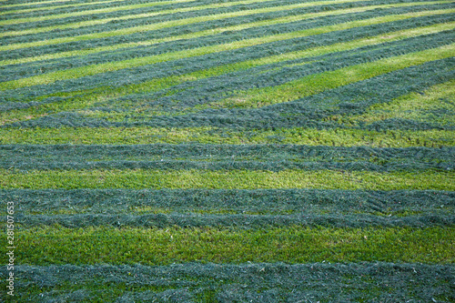 Agricultural ,green,grass background. Wallpaper Mural