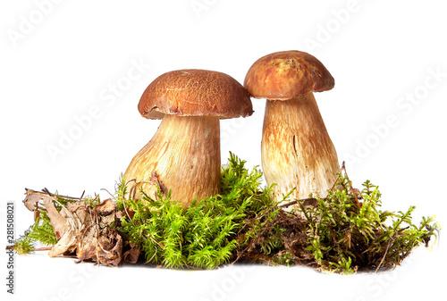 Fototapeta Boletus. Mushrooms and moss. Boletus on a white background. obraz