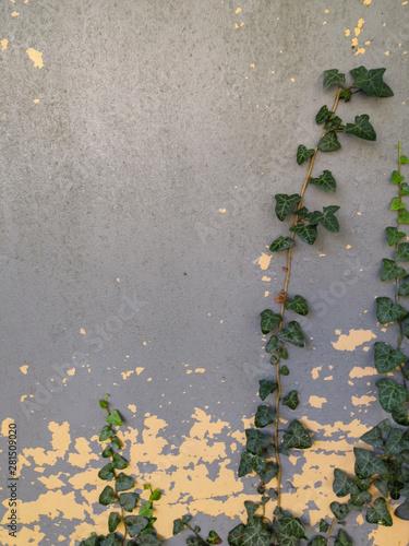 architektura-miejska-z-zielonym-bluszczem-opadajacym-po-scianie-z-cieniami-i-przestrzenia-kopii