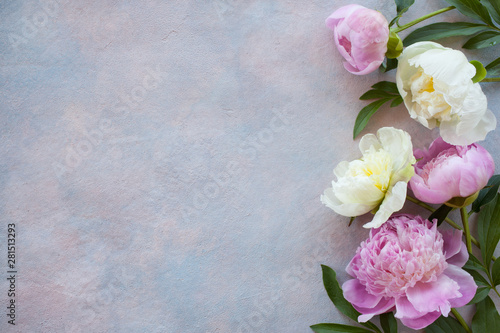 Peonies on the background of colored plaster and space for text Canvas-taulu