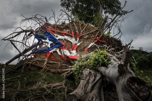 Puerto Rico State Tree