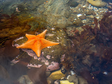 Starfish Surrounded By Rocks A...