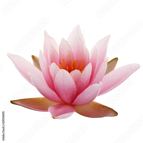 Poster de jardin Nénuphars Pink Lotus or Water lily isolated on white background