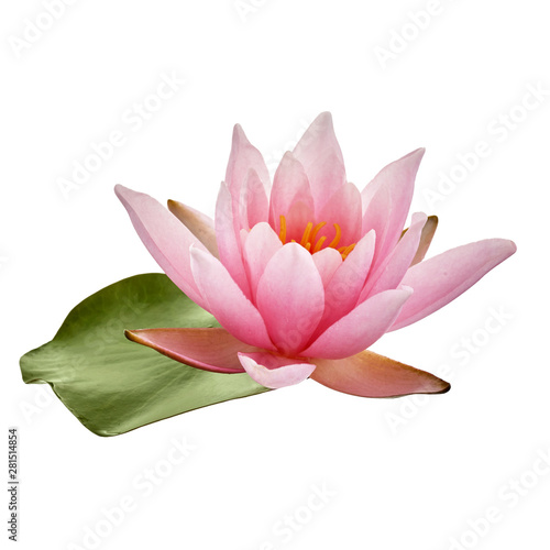 Poster de jardin Nénuphars Pink lotus flower or water lily with green leaf isolated on white background
