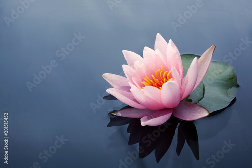 Poster de jardin Nénuphars Beautiful pink lotus or water lily flowers blooming on pond