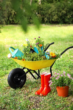 Wheelbarrow With Gardening Tools And Flowers On Grass Outside