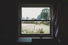 View Of Trees Seen Through Sash Window