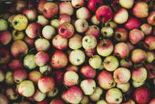 Overhead View Of Green And Red Apples