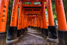View Of Empty Path Passing Through Torii Gates, Kyoto, Japan