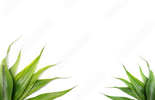 Valokuvatapetti nature green leaves on white background