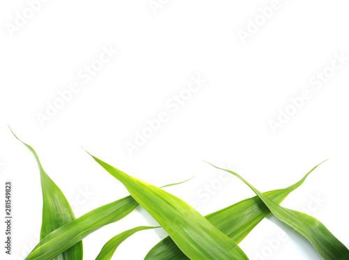 Obraz na plátne  nature green leaves on white background