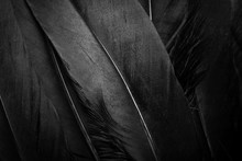 Black Feather Texture Background