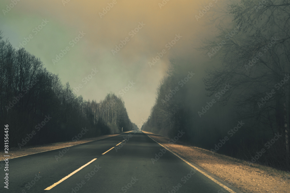 Fototapety, obrazy: Forest road. way through the forest. country road