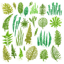 Tropical Textured Leaves Set W...