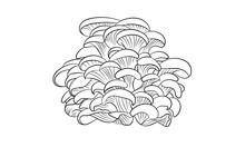Line Drawing Mushroom Illustration Vector Outline