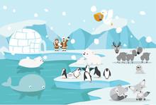 Animals North Pole Arctic Landscape