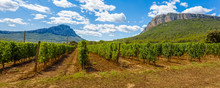 Vineyard In The Mountains, Pic Saint-Loup, Hérault,  France