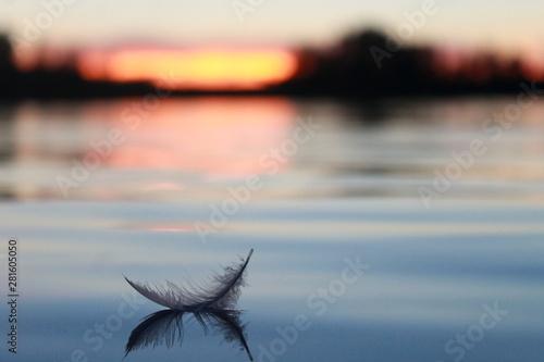 Carta da parati A Feather on the lake
