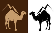 Standing Dromedary Camel And G...