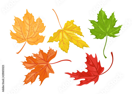 Fotografía Set of autumn colored maple leaves isolated on white background