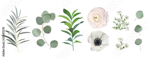 Photo set of watercolor leaves, anemone ranunculus flowers, eucalyptus branches