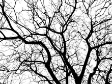 Branch Of Tree Silhouette
