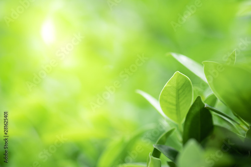 Poster Trees Closeup beautiful view of nature green leaf on greenery blurred background with sunlight and copy space. It is use for natural ecology summer background and fresh wallpaper concept.