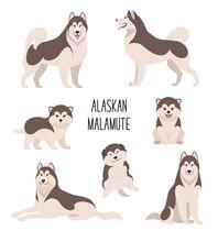 Alaskan Malamute. Vector Illus...