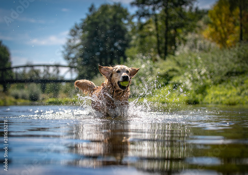Canvastavla Dog running in the water