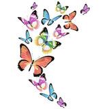 butterfly189