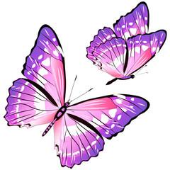butterfly187