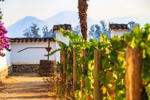 Winery, Maipo Valley, The Area Around Santiago De Chile.