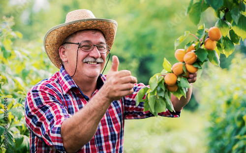 Fototapeta Orcharding. Happy farmer standing in the orchard and showing thumb up. Hobbies and leisure, agricultural concept obraz