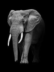 Fototapeta Zwierzęta Ellephant african wildlife