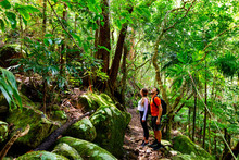 Couple Exploring In The Lush Lamington National Park, Queensland