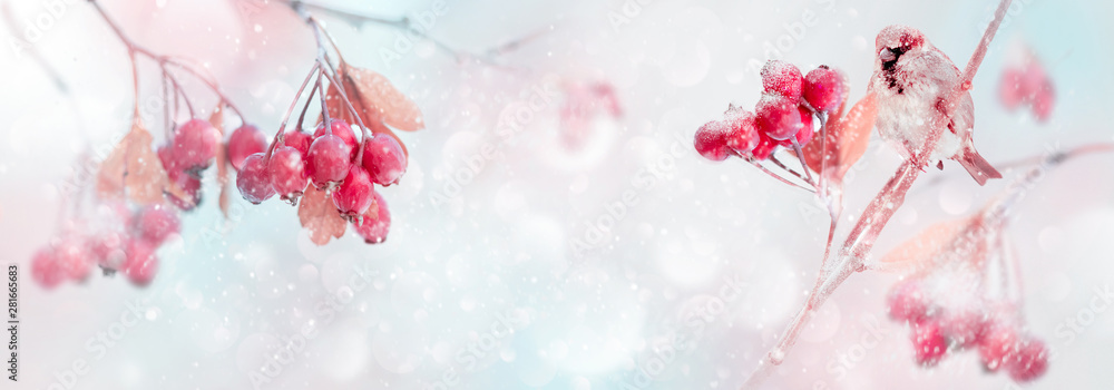 Fototapety, obrazy: Winter tender magic forest tale. Red bright berries and sparrow in a snowy park. Winter and autumn concept. Free space for text. Wide format.