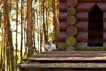 Cat And Log Cabin