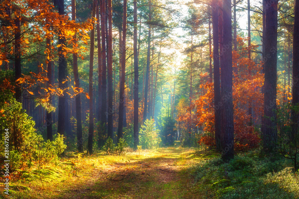 Fototapeta Autumn nature landscape. Sunny autumn forest. Beautiful colorful trees in woodland