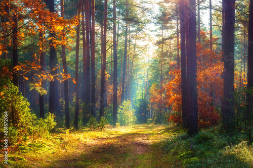 Autumn nature landscape. Sunny autumn forest. Beautiful colorful trees in woodland