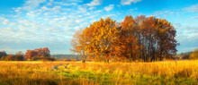 Beautiful Panoramic Autumn Nature Landscape. Sunny Morning On Autumnal Meadow. Scenic Autumn. Scenery Of Golden Trees On Grassy Field