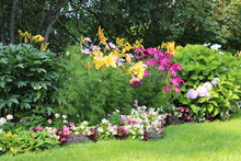 Nice Selection Of Big And Beautiful Colourful Flowers In Garden