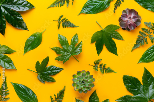 Photo sur Toile Nature Green plant on the yellow background. Retro vintage style.