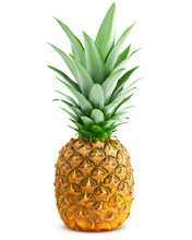Pineapple Isolated On White Background, Clipping Path, Full Depth Of Field