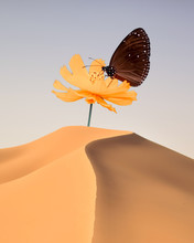 Butterfly On Flower In The Sand Dunes