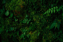 Texture Of Green Moss And Leaves On Stone Wall Background