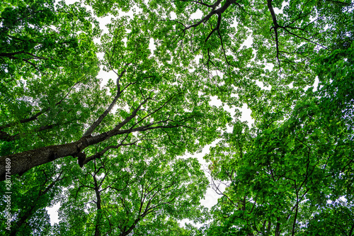 Spoed Fotobehang Groene Looking up at green trees canopy and sky