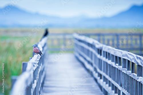 Red turtle dove sleeping on the footbridge in the lake. Fototapet